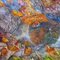 Autumn Watch-1 by Alexander Vlasyuk - search and link Fine Art with ARTdefs.com