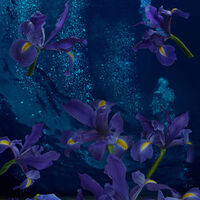 Iris France by Andrea DiFiore - search and link Fine Art with ARTdefs.com