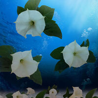 Lily Italy by Andrea DiFiore - search and link Fine Art with ARTdefs.com