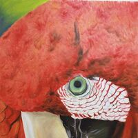Guacamayo by Audra Diaz - search and link Fine Art with ARTdefs.com