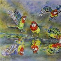 Eastern Rosella reflections by Susan Willemse - search and link Fine Art with ARTdefs.com