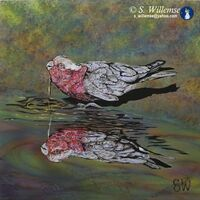 Galah reflection: Precious water by Susan Willemse - search and link Fine Art with ARTdefs.com