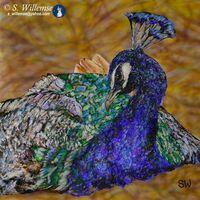 Peacock by Susan Willemse - search and link Fine Art with ARTdefs.com