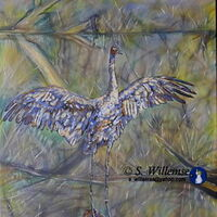 Brolga reflection by Susan Willemse - search and link Fine Art with ARTdefs.com