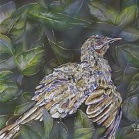 Sunbathing Wattlebird by Susan Willemse - search and link Fine Art with ARTdefs.com