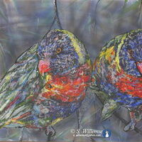 Rainbow Lorikeet: Looking at you by Susan Willemse - search and link Fine Art with ARTdefs.com