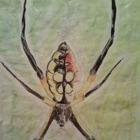 Yellow Garden Spider by Susan Royer - search and link Fine Art with ARTdefs.com