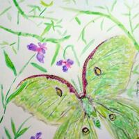 Luna Moth Fly By by Susan Royer - search and link Fine Art with ARTdefs.com