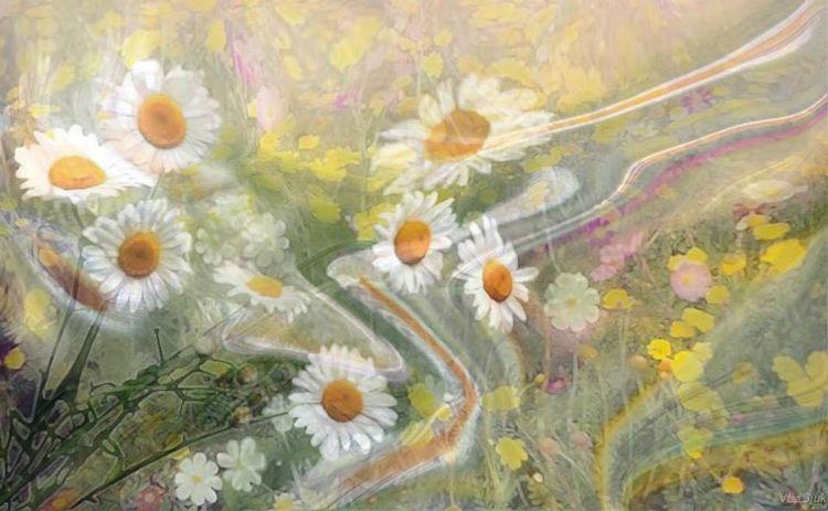 July chamomiles by Alexander Vlasyuk - search and link Fine Art with ARTdefs.com