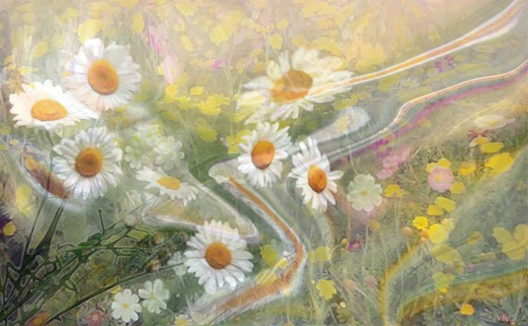 July chamomiles by Alexander Vlasyuk - search and link Fine Art with ARTdefs.com