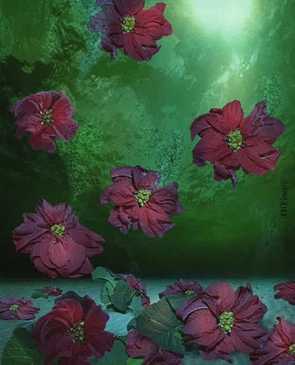 Poinsettia Christmas by Andrea DiFiore - search and link Fine Art with ARTdefs.com