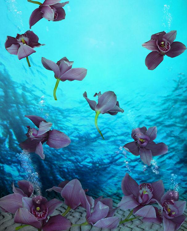 Orchid Venezuela by Andrea DiFiore - search and link Fine Art with ARTdefs.com