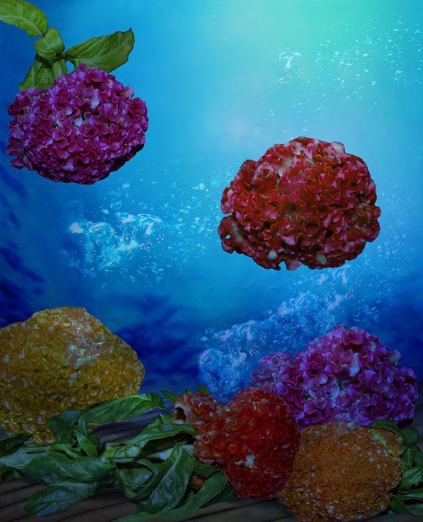 Celosia Zaire by Andrea DiFiore - search and link Fine Art with ARTdefs.com