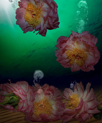 Peony Qatar by Andrea DiFiore - search and link Fine Art with ARTdefs.com