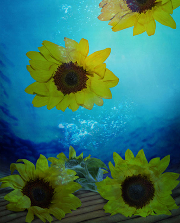 Sunflower Ukrain by Andrea DiFiore - search and link Fine Art with ARTdefs.com
