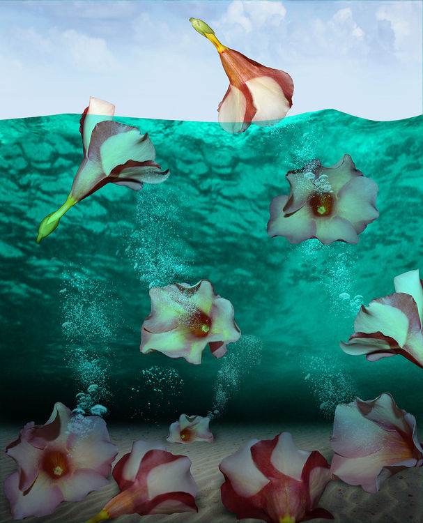 Pink Cozumel by Andrea DiFiore - search and link Fine Art with ARTdefs.com