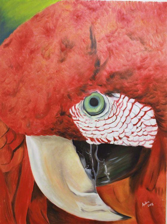 Guacamayo by Audra Diaz - search and link Fine Art with ARTdefs.com