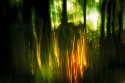 Eirie Forest by George Kaplan - search and link Fine Art with ARTdefs.com
