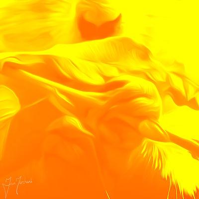 Prairie Dog by Iain Merchant - search and link Fine Art with ARTdefs.com
