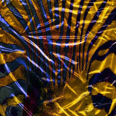Zebra by Iain Merchant - search and link Fine Art with ARTdefs.com