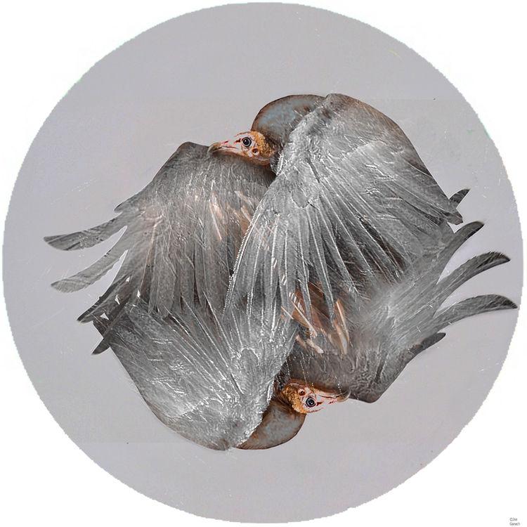 The vulture by Joe Ganech - search and link Fine Art with ARTdefs.com