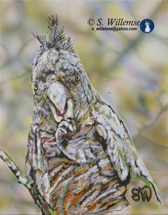 Gang gang girl eating Hawthorn berries by Susan Willemse - search and link Fine Art with ARTdefs.com