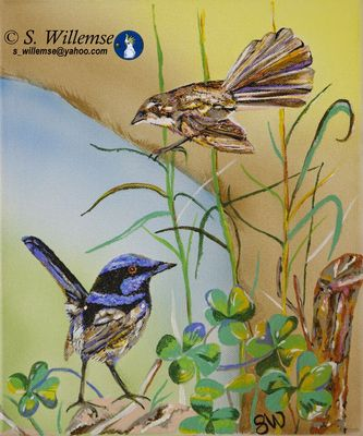 Fairy- wrens by Susan Willemse - search and link Fine Art with ARTdefs.com