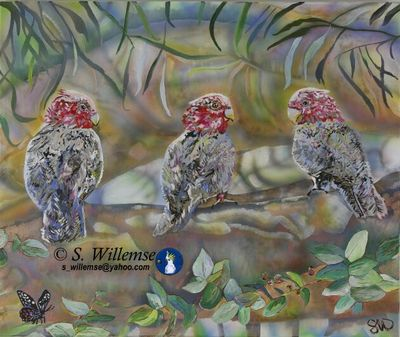 Three Galahs by Susan Willemse - search and link Fine Art with ARTdefs.com