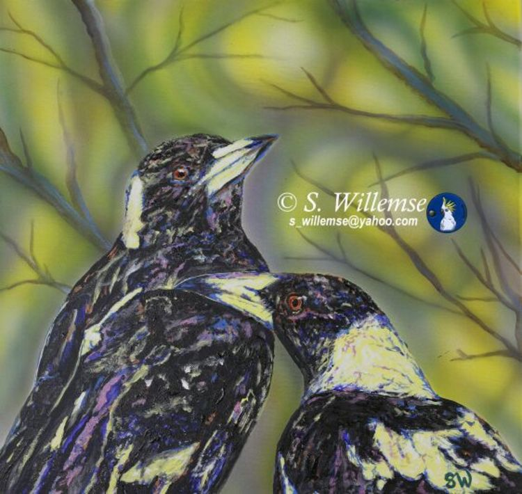 Magpies by Susan Willemse - search and link Fine Art with ARTdefs.com
