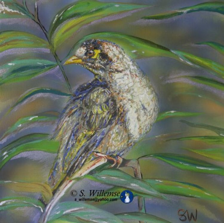 Noisy Miner by Susan Willemse - search and link Fine Art with ARTdefs.com