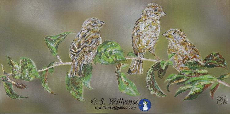 Rural Sparrows by Susan Willemse - search and link Fine Art with ARTdefs.com