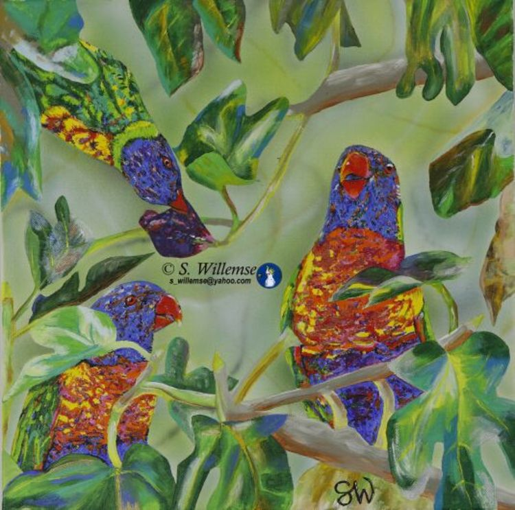 Rainbow Lorikeet in the fig tree by Susan Willemse - search and link Fine Art with ARTdefs.com