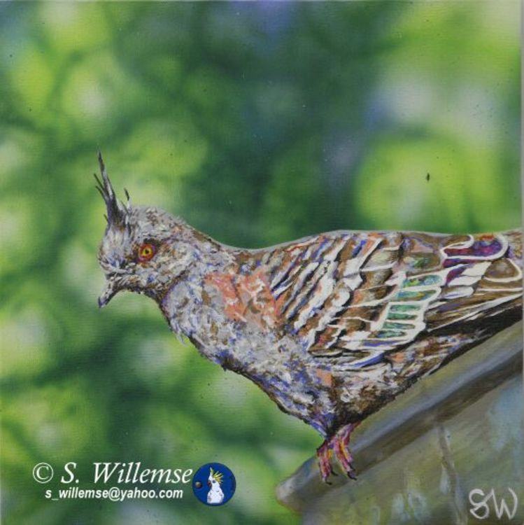 Crested Pigeon by Susan Willemse - search and link Fine Art with ARTdefs.com