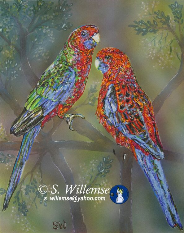 Crimson Rosellas: Father and son by Susan Willemse - search and link Fine Art with ARTdefs.com