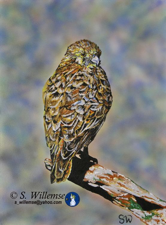 Brown Falcon by Susan Willemse - search and link Fine Art with ARTdefs.com