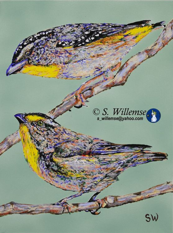 Pardalotes by Susan Willemse - search and link Fine Art with ARTdefs.com