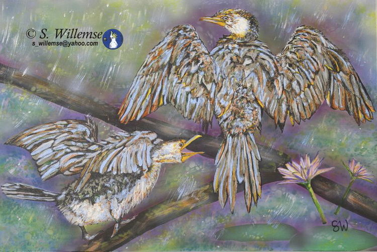 Cormorants: Dancing in the rain by Susan Willemse - search and link Fine Art with ARTdefs.com