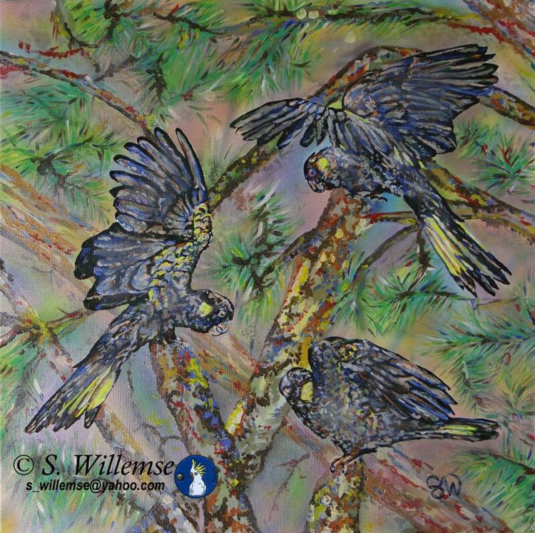 Yellow- tailed Black Cockatoos by Susan Willemse - search and link Fine Art with ARTdefs.com
