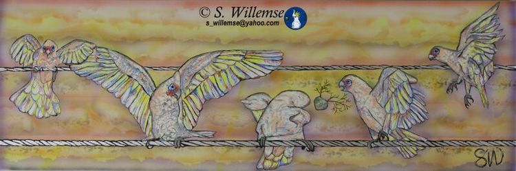 Sunset Corellas by Susan Willemse - search and link Fine Art with ARTdefs.com