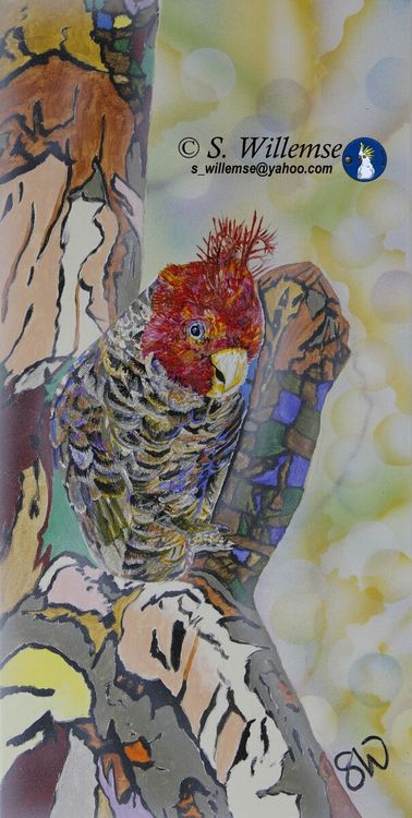 """""""Party boy"""" Gang- gang by Susan Willemse - search and link Fine Art with ARTdefs.com"""