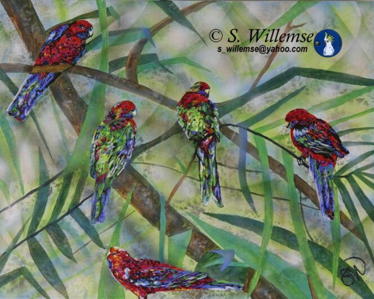 Crimson Rosellas by Susan Willemse - search and link Fine Art with ARTdefs.com