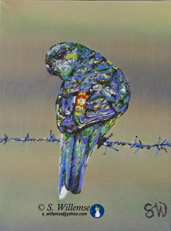 Red- rumped Parakeet by Susan Willemse - search and link Fine Art with ARTdefs.com
