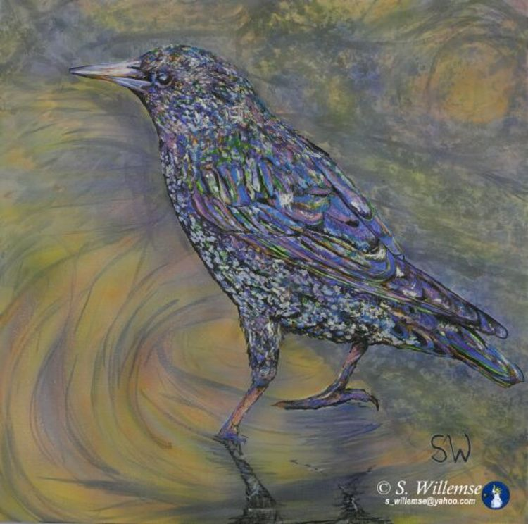 Starling by Susan Willemse - search and link Fine Art with ARTdefs.com