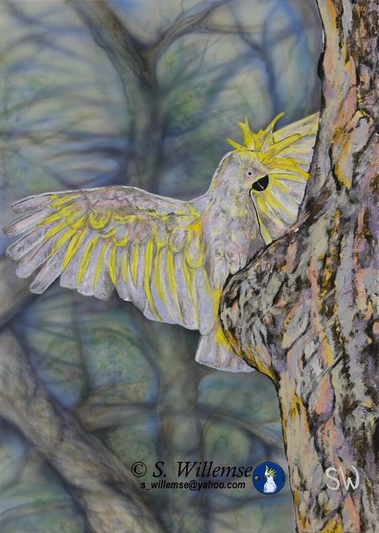 Sulphur- crested Cocakatoo: Is anyone home? by Susan Willemse - search and link Fine Art with ARTdefs.com