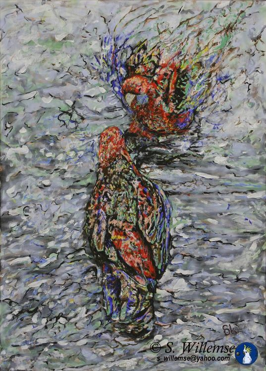 Bathing Rosellas by Susan Willemse - search and link Fine Art with ARTdefs.com