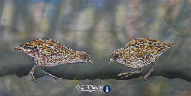 Baillon's Crake by Susan Willemse - search and link Fine Art with ARTdefs.com
