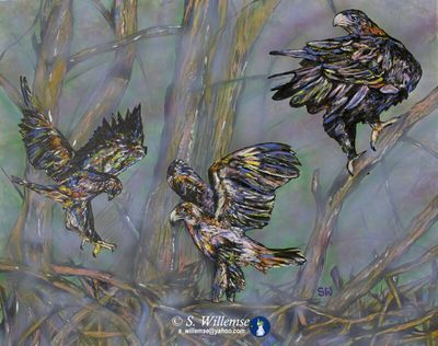 Wedge-tailed Eagles: Learning to fly by Susan Willemse - search and link Fine Art with ARTdefs.com