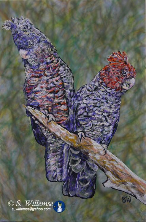 A couple of Gang-gangs by Susan Willemse - search and link Fine Art with ARTdefs.com