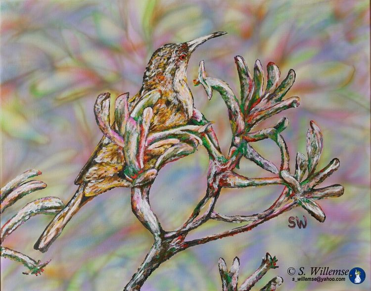 Spinebill on Kangaroo Paw by Susan Willemse - search and link Fine Art with ARTdefs.com