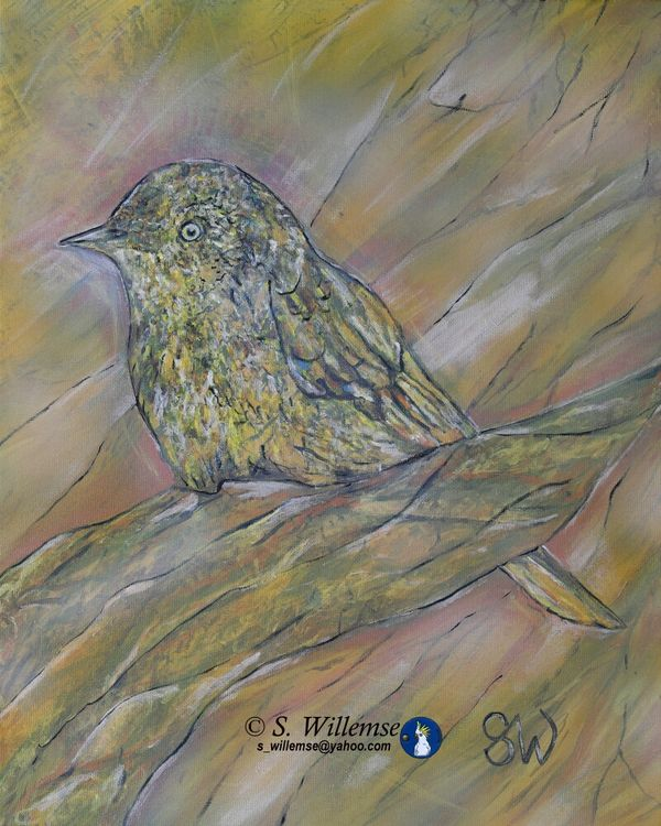 Thornbill by Susan Willemse - search and link Fine Art with ARTdefs.com
